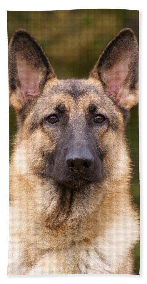 German Shepherd Bath Sheet featuring the photograph Sable German Shepherd Dog by Sandy Keeton