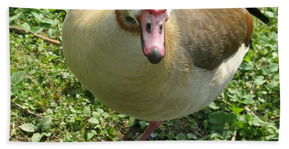 Goose Hand Towel featuring the photograph Sad Goose by Christiane Schulze Art And Photography