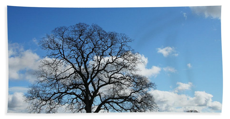 Tree Hand Towel featuring the photograph Same Tree Many Skies 11 by Robert Woodward