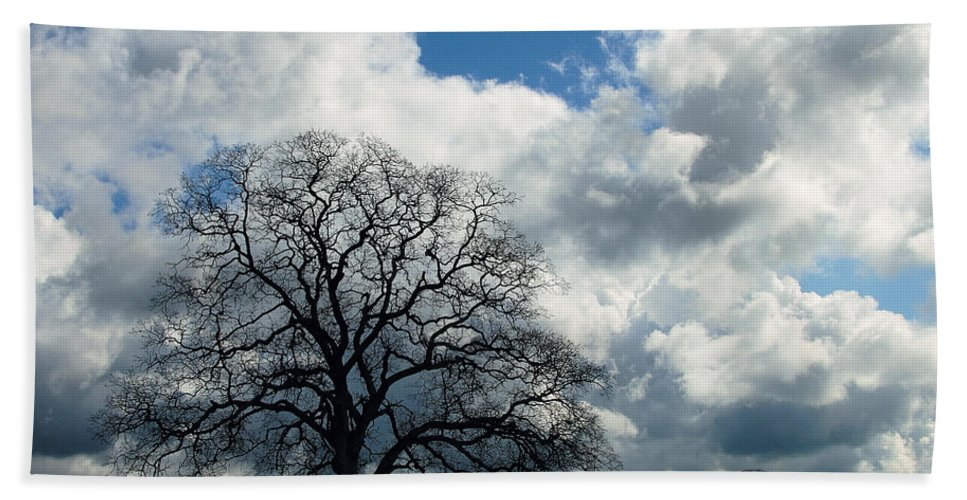 Tree Bath Sheet featuring the photograph Same Tree Many Skies 13 by Robert Woodward