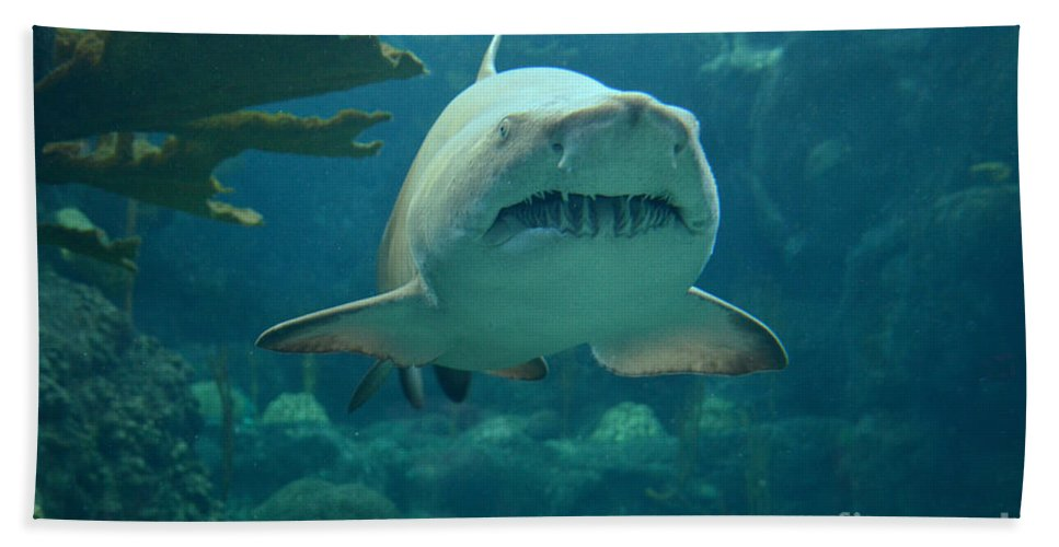 Sand Shark Hand Towel featuring the photograph Sand Shark by Robert Meanor