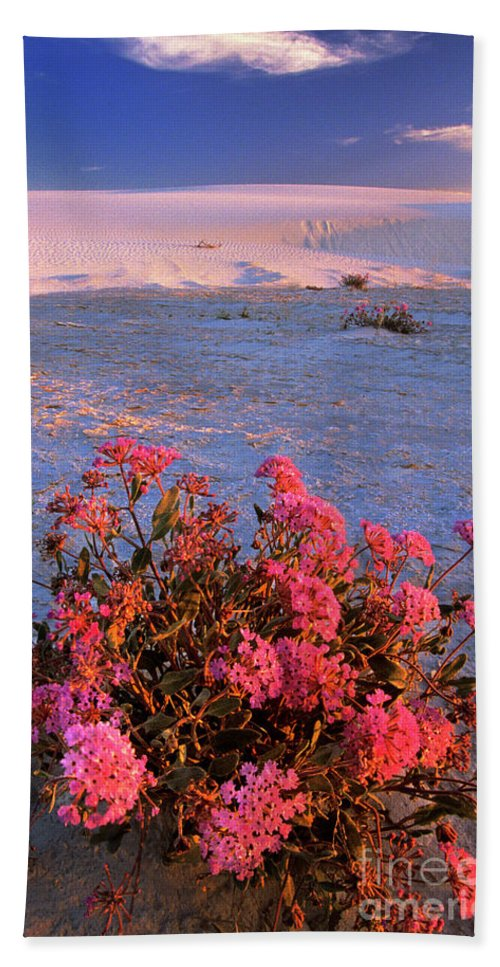 North America Hand Towel featuring the photograph Sand Verbenas At Sunset White Sands National Monument by Dave Welling