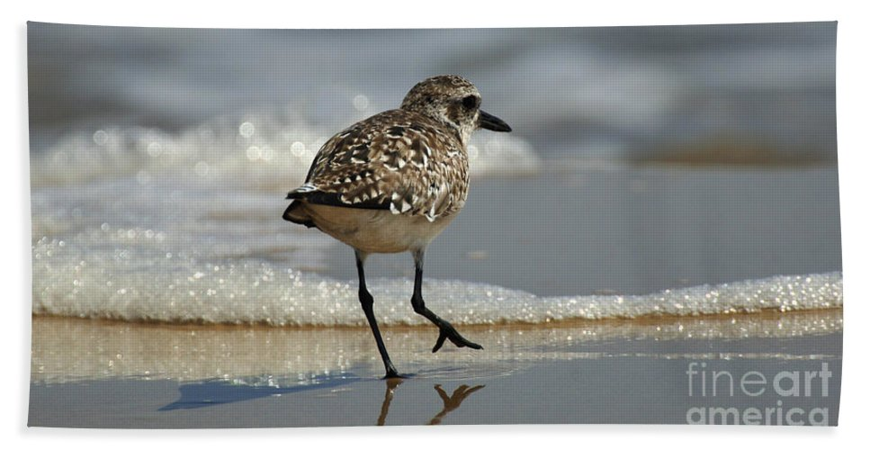 Bird Hand Towel featuring the photograph Sanderling Gulf Of Mexico by Bob Christopher