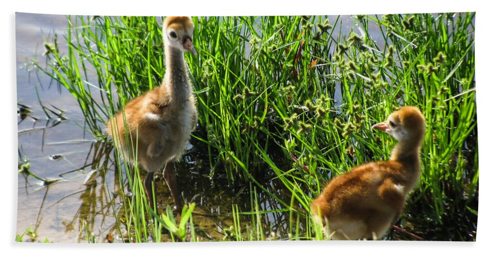 Baby Birds Hand Towel featuring the photograph Sandhill Crane Chicks by Zina Stromberg