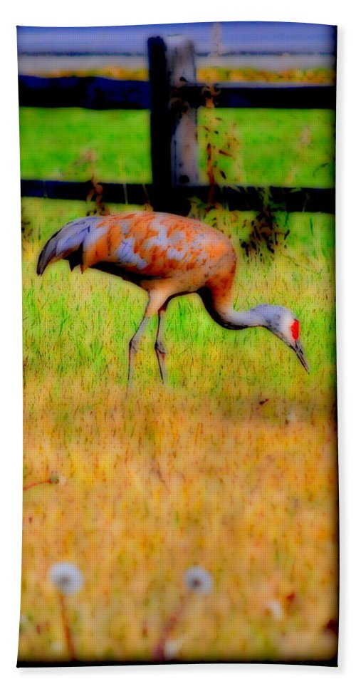 Migratory Hand Towel featuring the photograph Sandhill Crane II by Kathy Sampson
