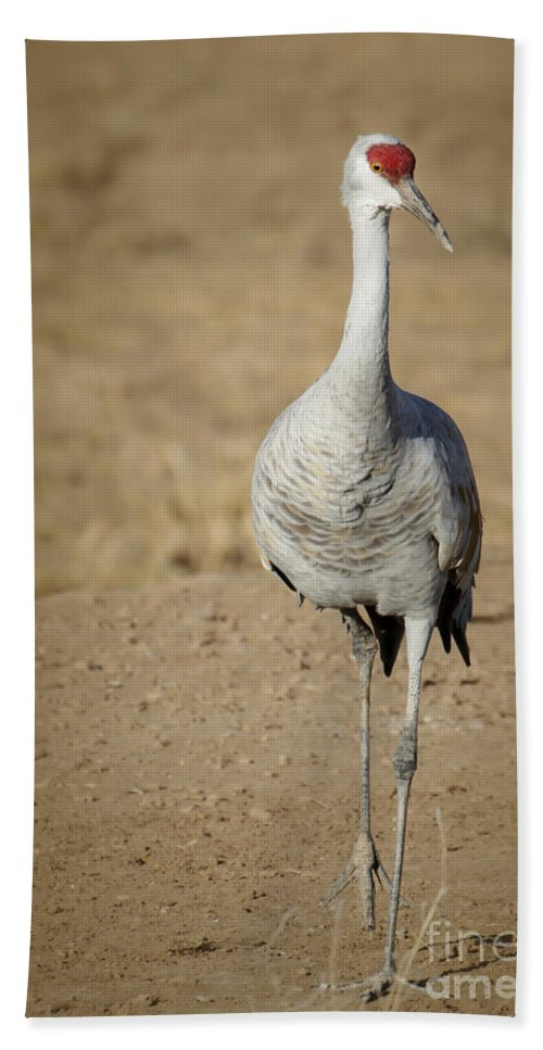 Winter Hand Towel featuring the photograph Sandhill Crane In The Spotlight by Sabrina L Ryan