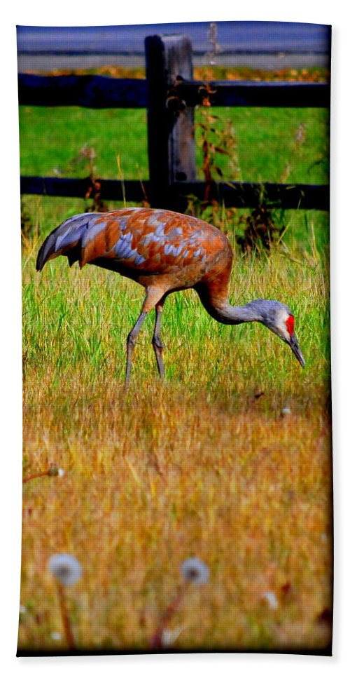 Migratory Hand Towel featuring the photograph Sandhill Crane by Kathy Sampson