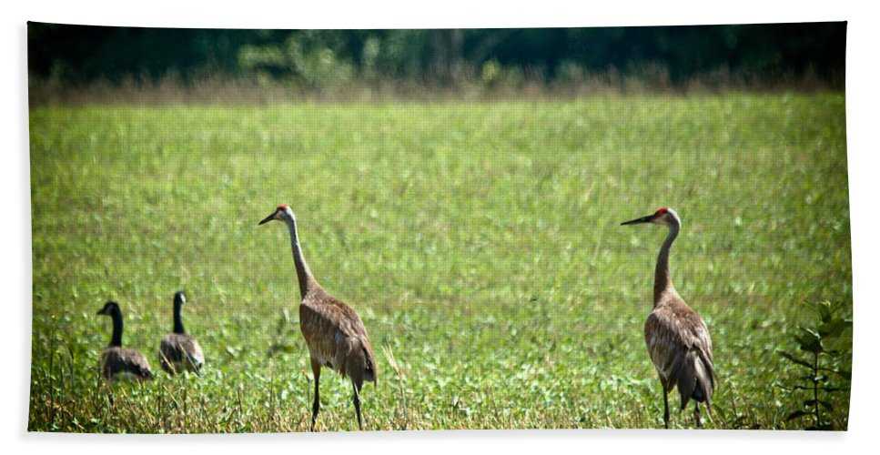 Sandhill Cranes Hand Towel featuring the photograph Sandhill Cranes And Friends by Cheryl Baxter
