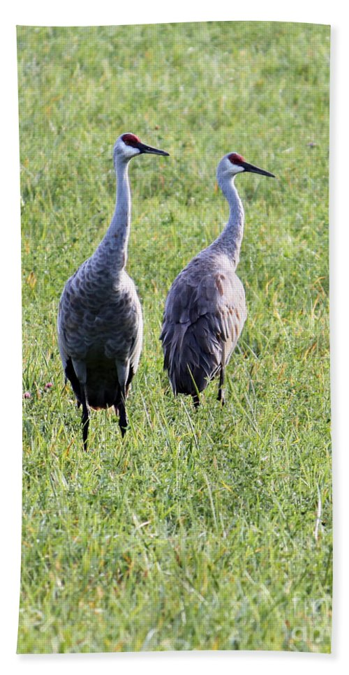 Sandhill Crane Hand Towel featuring the photograph Sandhill Cranes In Wisconsin by Debbie Hart