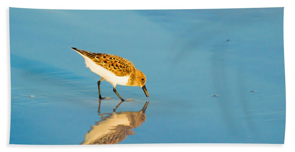 susan Molnar Hand Towel featuring the photograph Sandpiper Mirror by Susan Molnar
