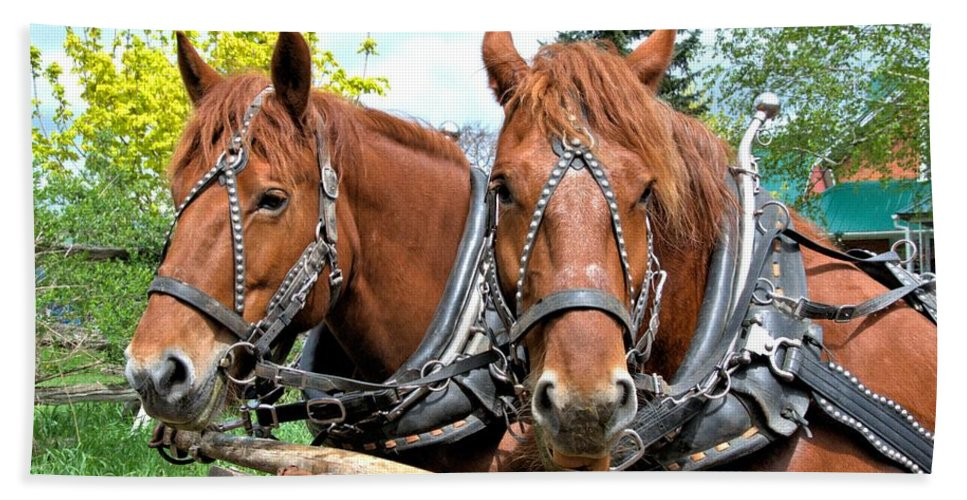 Draft Horse Bath Sheet featuring the photograph Sandy And Judy by Valerie Kirkwood