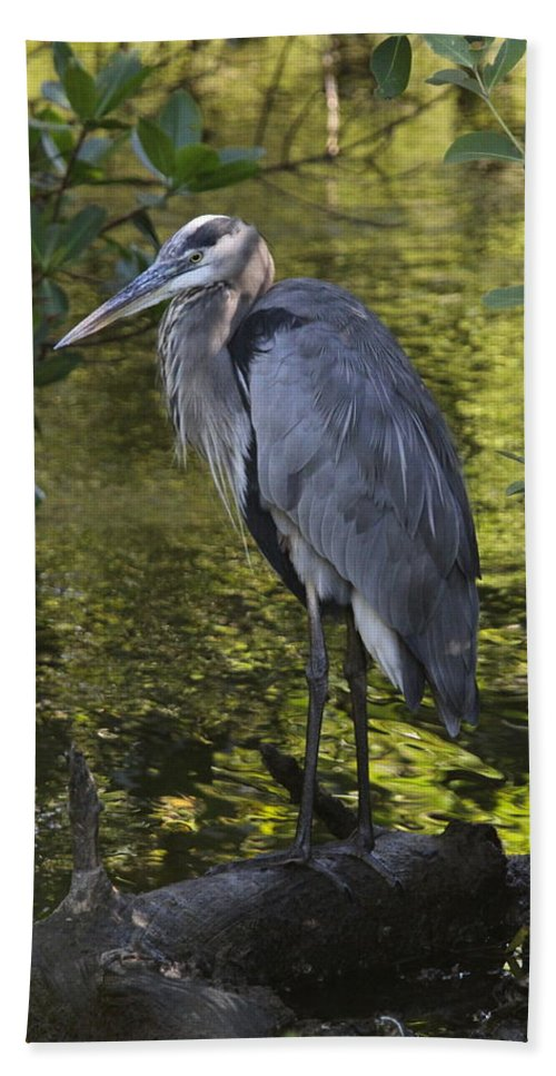 Great Blue Heron Hand Towel featuring the photograph Sanibel Great Blue Heron by Christiane Schulze Art And Photography