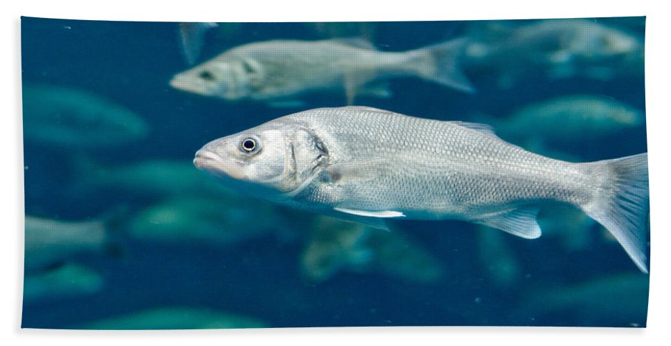 Atlantic Ocean Hand Towel featuring the photograph Sardines by Jouko Lehto