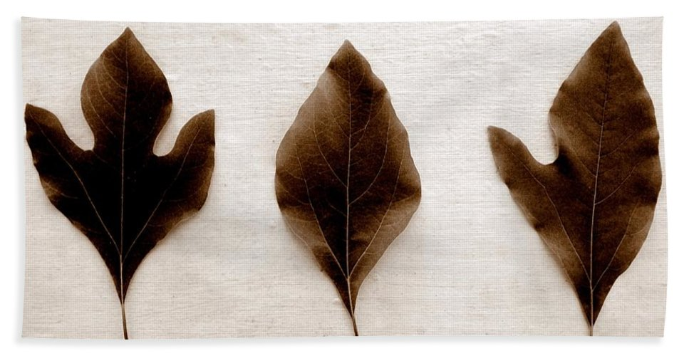 Sassafras Leaf Bath Sheet featuring the photograph Sassafras Leaves In Sepia by Michelle Calkins