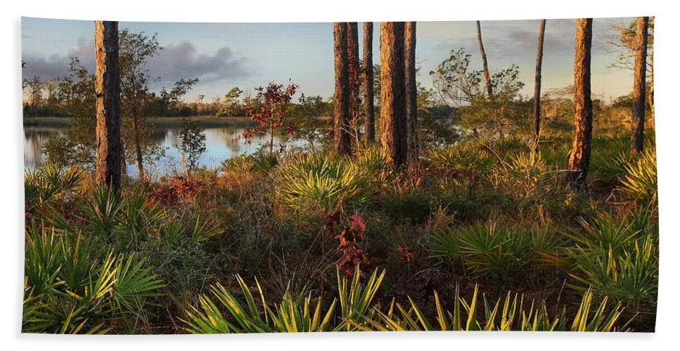 Tim Fitzharris Bath Towel featuring the photograph Saw Palmetto And Longleaf Pine by Tim Fitzharris