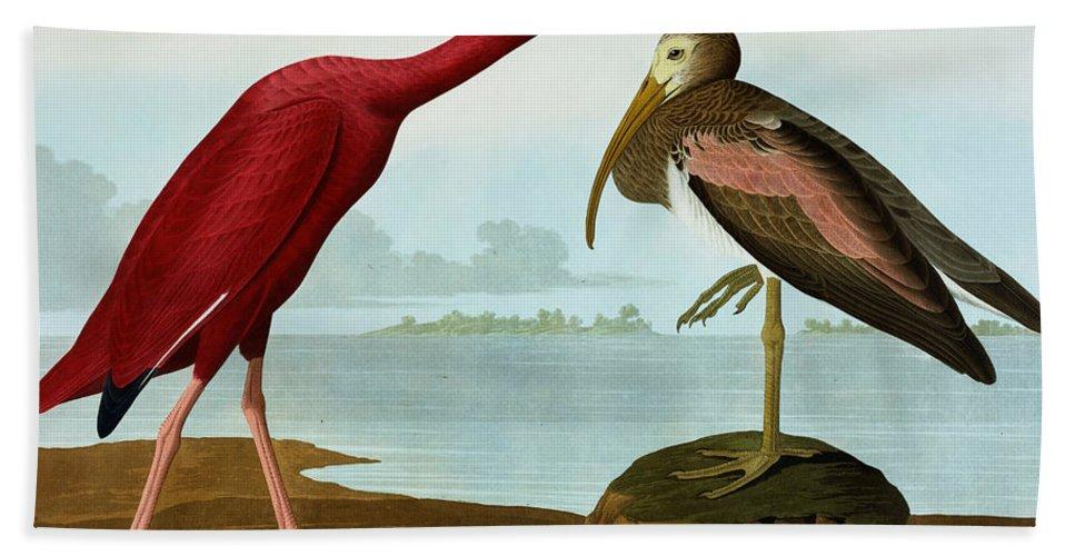 Bird Bath Sheet featuring the painting Scarlet Ibis by John James Audubon