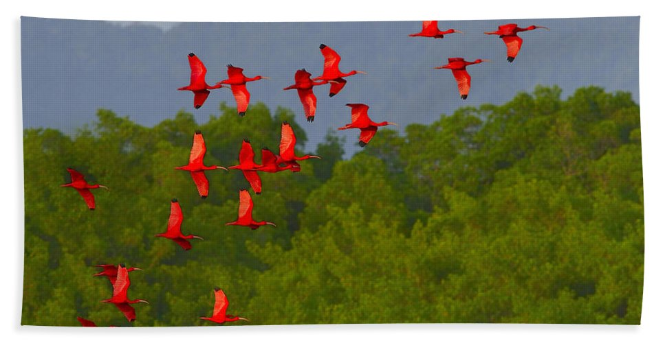 Scarlet Ibis Bath Sheet featuring the photograph Scarlet Ibis by Tony Beck