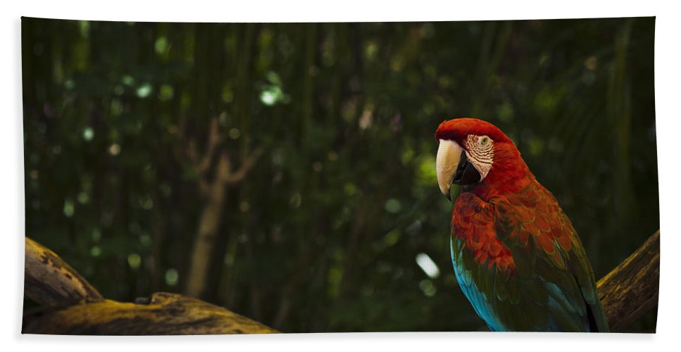 Scarlet Bath Sheet featuring the photograph Scarlet Macaw Profile by Bradley R Youngberg