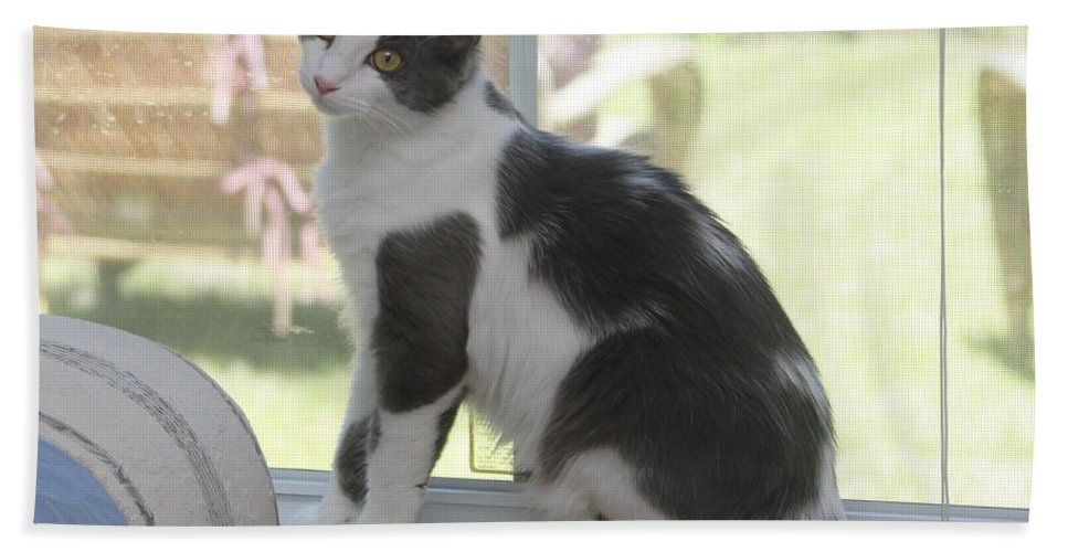 Cat Hand Towel featuring the photograph Scarlow Sitting In The Window by Michelle Powell