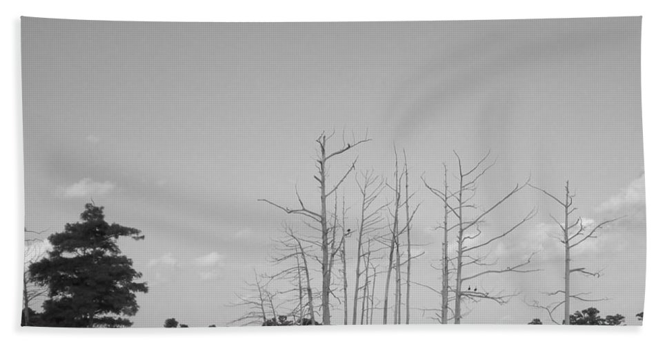 Cypress Trees Bath Sheet featuring the photograph Scenic Swamp Cypress Trees Black And White by Joseph Baril