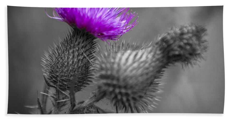 Thistle Hand Towel featuring the photograph Scotland Calls 1 by Scott Campbell