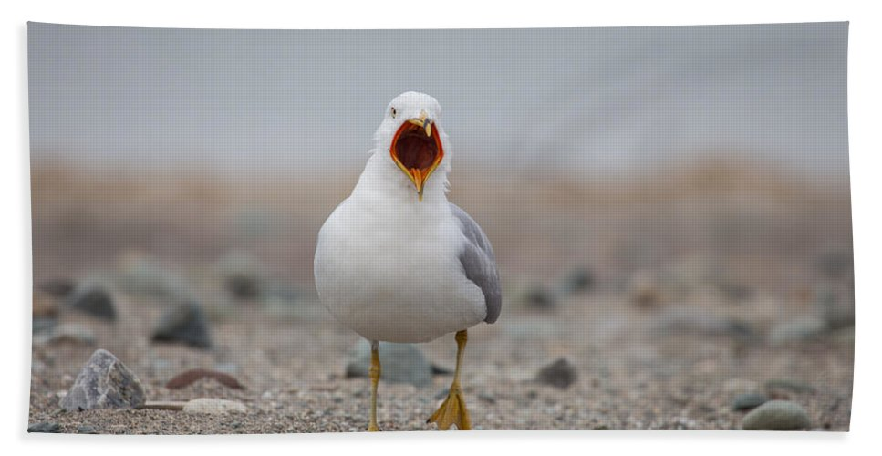 Screaming Seagull Hand Towel featuring the photograph Screaming Seagull by Karol Livote
