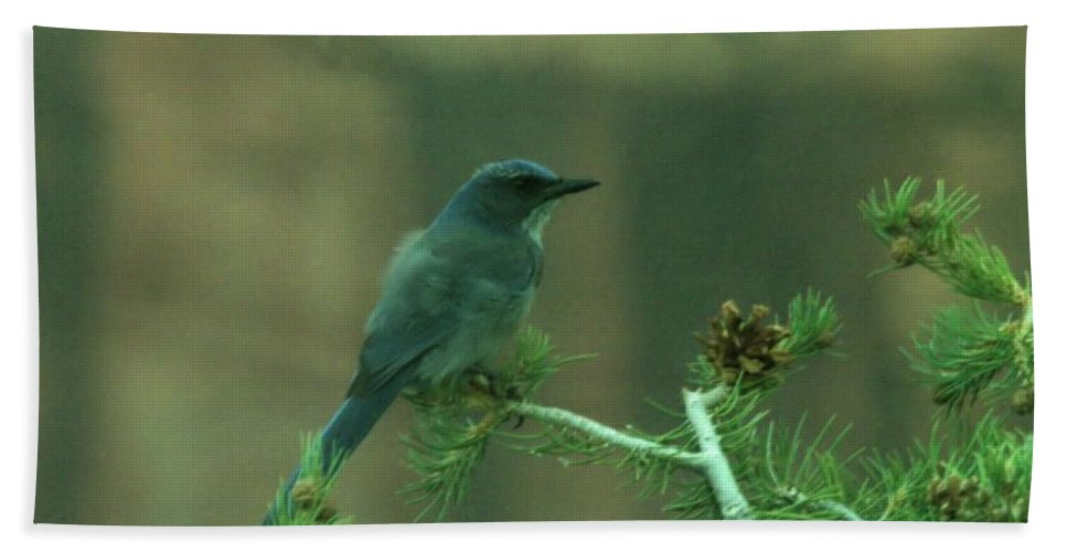 Hand Towel featuring the photograph Scrub Jay by Jeff Swan