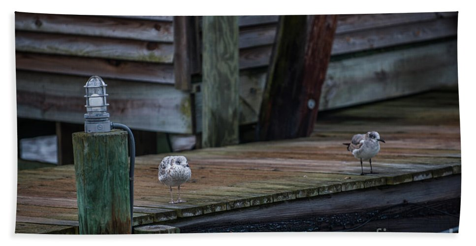 Sea Birds Hand Towel featuring the photograph Sea Birds Dockside by Dale Powell