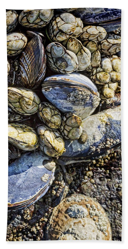 Mussels Hand Towel featuring the photograph Sea Life by Kelley King