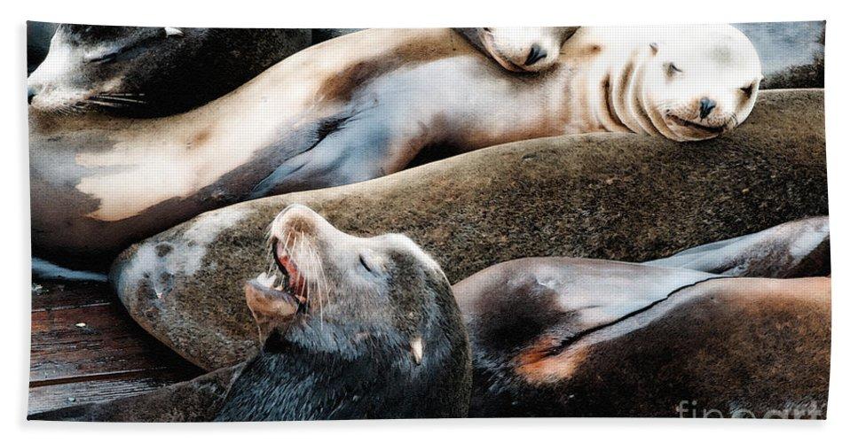 Sea Lion Bath Sheet featuring the photograph Sea Lion Dreams by Gwyn Newcombe
