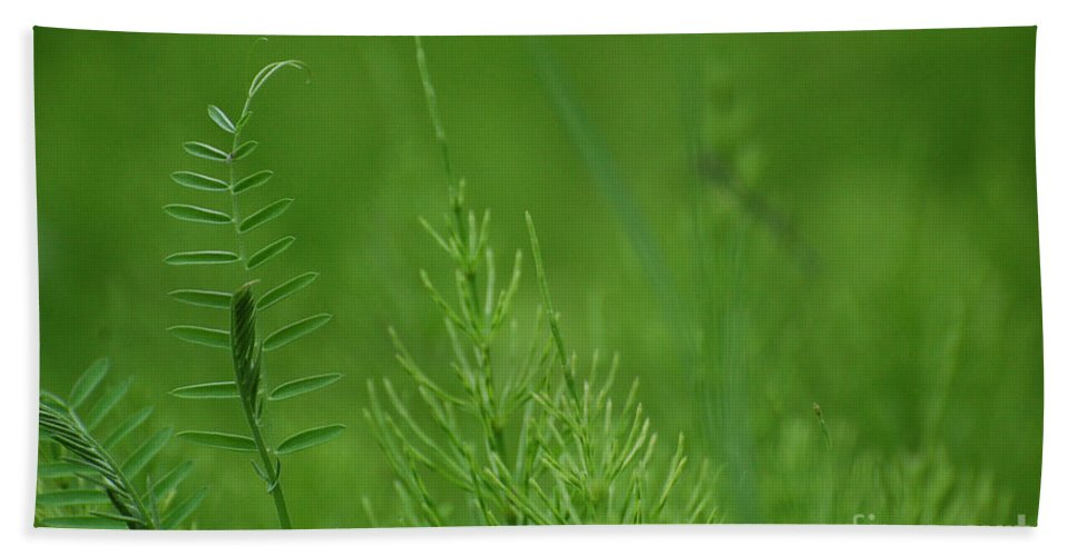 Grass Hand Towel featuring the photograph Sea Of Green by Bianca Nadeau