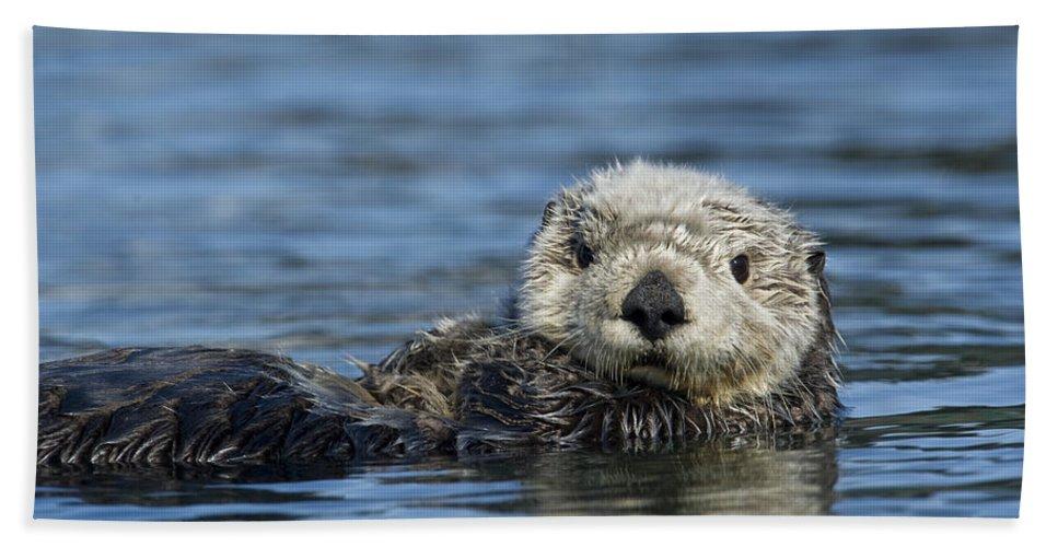 Michael Quinton Bath Towel featuring the photograph Sea Otter Alaska by Michael Quinton