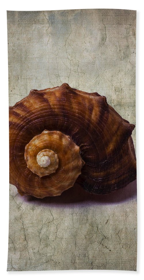 Sea Shell Bath Sheet featuring the photograph Sea Snail by Garry Gay