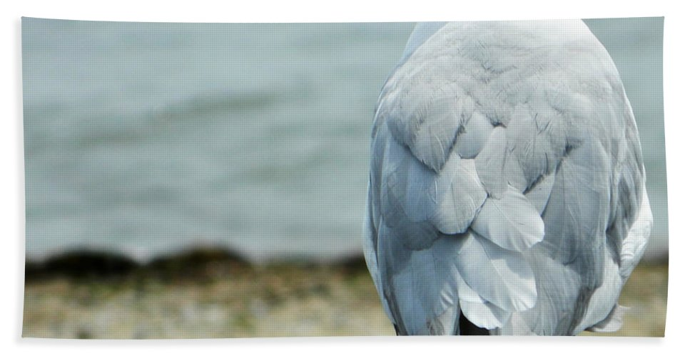 Seagull Hand Towel featuring the photograph Seagull by Andrea Anderegg