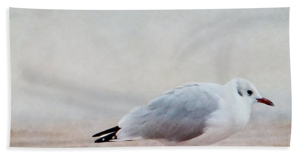 Seagull Bath Sheet featuring the photograph Seagull by Heike Hultsch