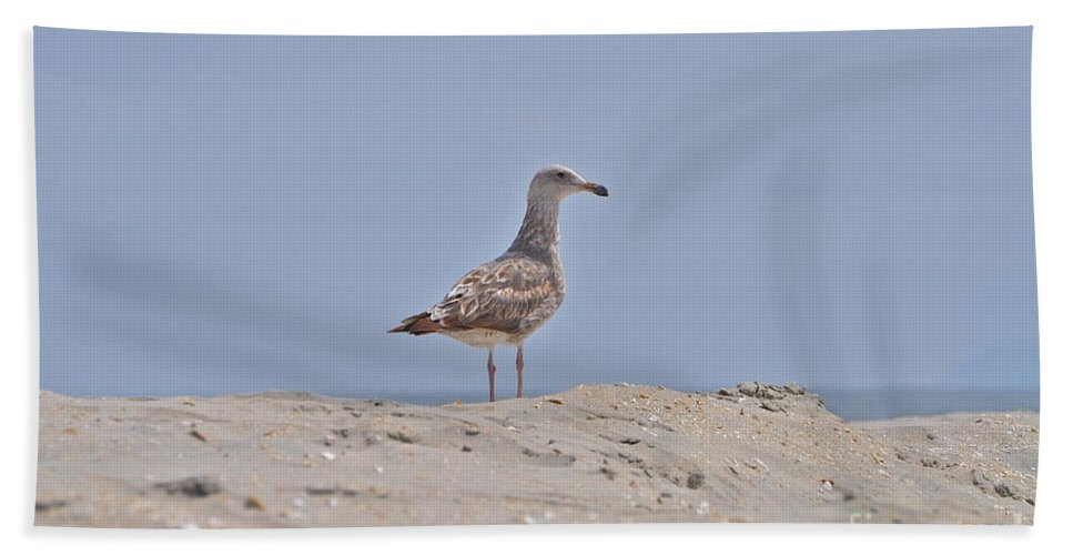 Seagull Hand Towel featuring the photograph Seagull N Sand by Bridgette Gomes