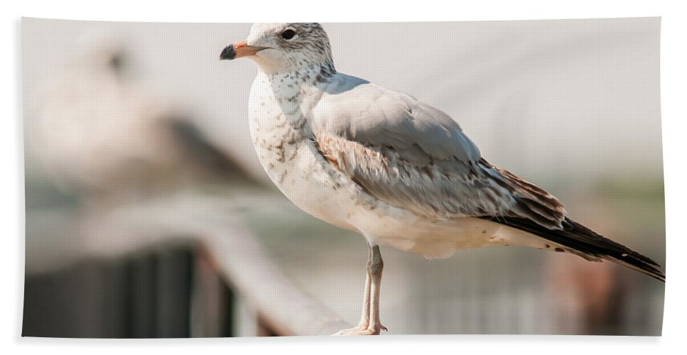 Atlantic Hand Towel featuring the photograph Seagull Standing On Rail by Alex Grichenko