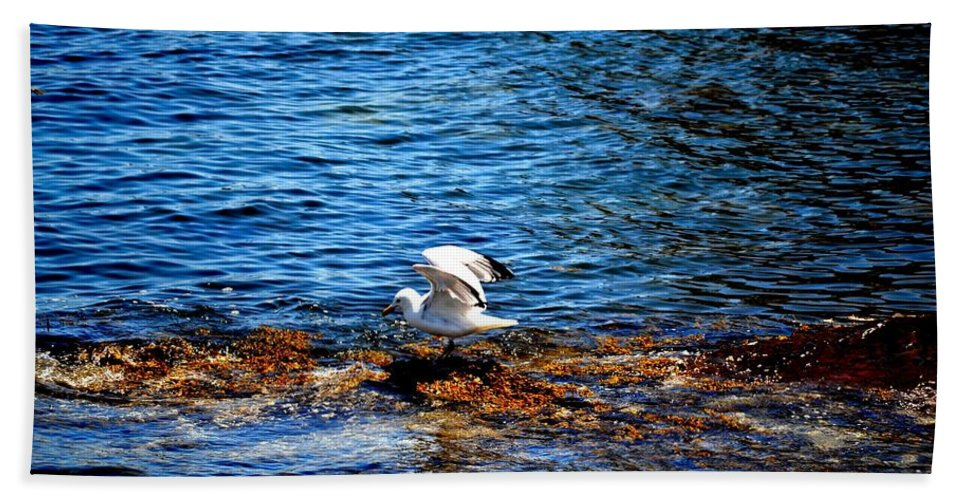Seagull Hand Towel featuring the photograph Seagull Wings Lifted by Tara Potts