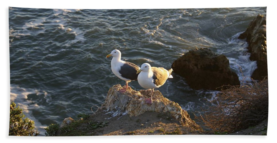 Seagulls Aka Pismo Poopers Bath Sheet featuring the digital art Seagulls Aka Pismo Poopers by Barbara Snyder