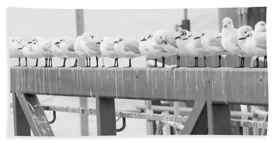 Birds Bath Sheet featuring the photograph Seagulls In A Row by Chevy Fleet
