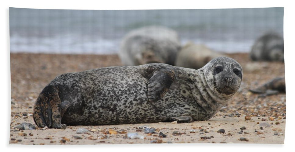 Seal Hand Towel featuring the photograph Seal Pup On Beach by Gordon Auld