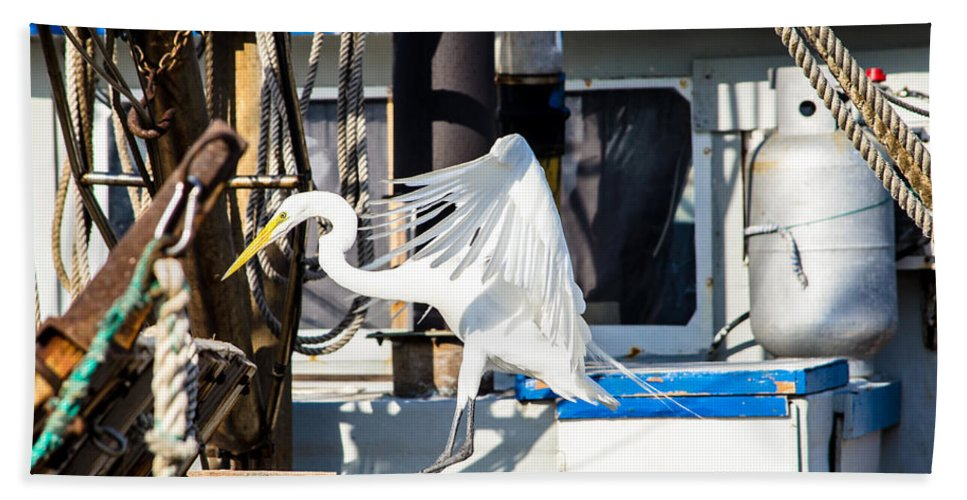 Great Egret Bath Sheet featuring the photograph Searching For Free Fish by Debra Martz
