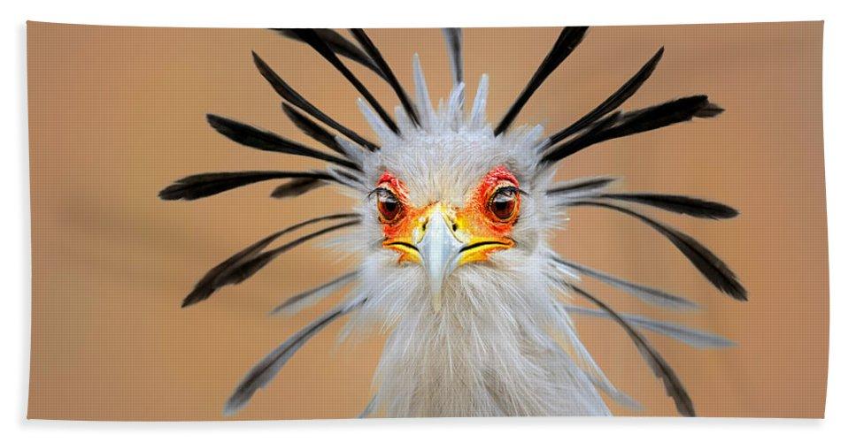 Bird Bath Towel featuring the photograph Secretary bird portrait close-up head shot by Johan Swanepoel