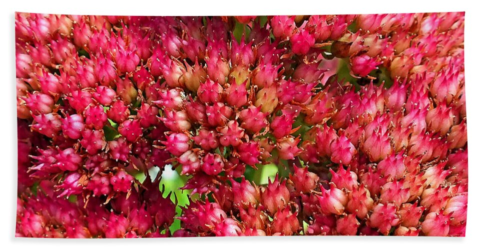 Duane Mccullough Bath Sheet featuring the photograph Sedums Upclose Filtered by Duane McCullough