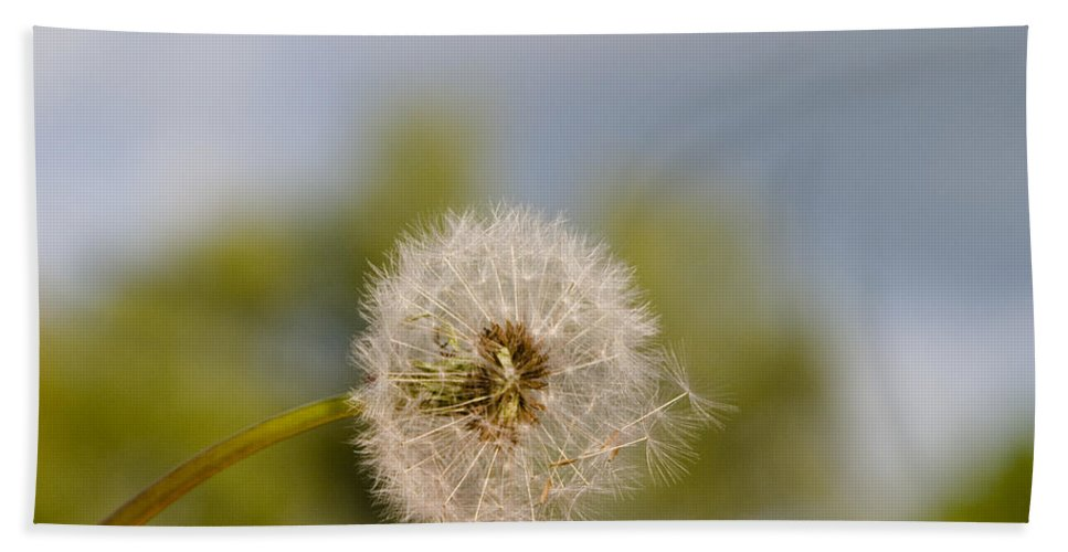 Dandelion Bath Sheet featuring the photograph Seed Lift-off by Peter Lloyd