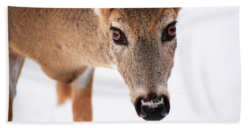Deer Hand Towel featuring the photograph Seeing Into The Eyes by Karol Livote