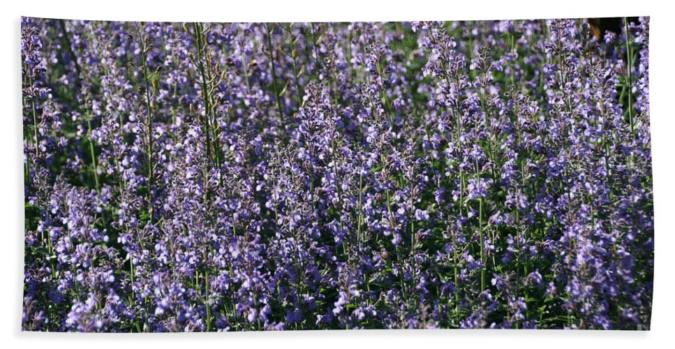 Flower Bath Sheet featuring the photograph Seeing Lavender by Susan Herber