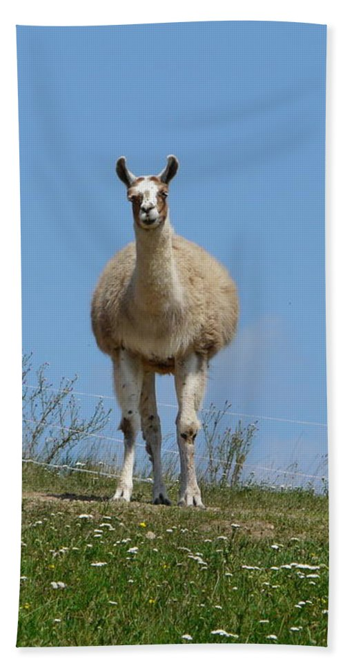 Lama Hand Towel featuring the photograph Sentinel by Valerie Ornstein