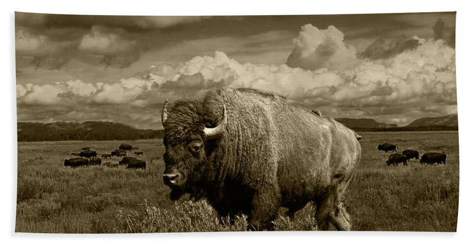 Bison Bath Sheet featuring the photograph King Of The Herd by Randall Nyhof