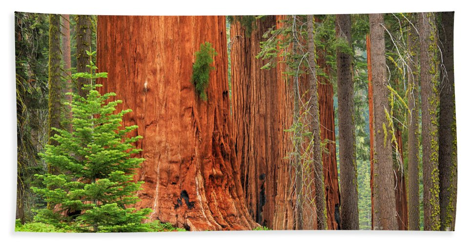America Bath Sheet featuring the photograph Sequoias by Inge Johnsson